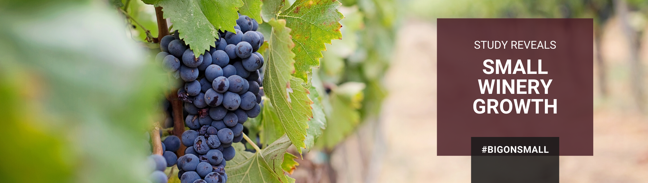 How even the smallest wineries can compete and be profitable!
